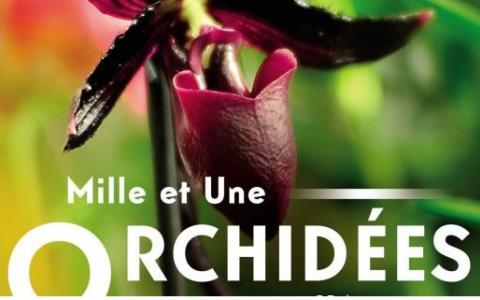 Mille et une orchidées, the exhibition at the Jardin des Plantes