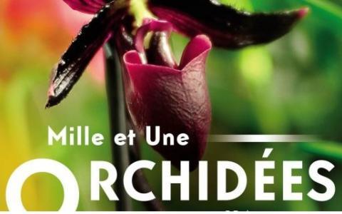 Mille et une orchidées, the exhibition at the Jardin des Plantes