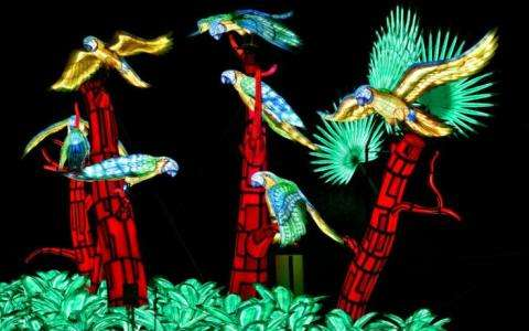 Enjoy La Vie en Voie d'Illumination's Bold Zoological Lanterns