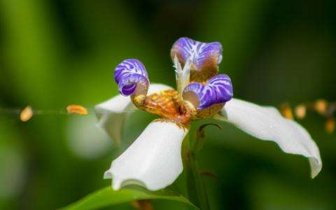 Discover A Thousand And One Orchids Next Spring In Paris