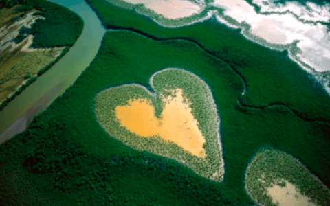 Explore The Changing Natural World With Yann Arthus Bertrand